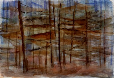 Untitled, from Cathedral Woods Series
